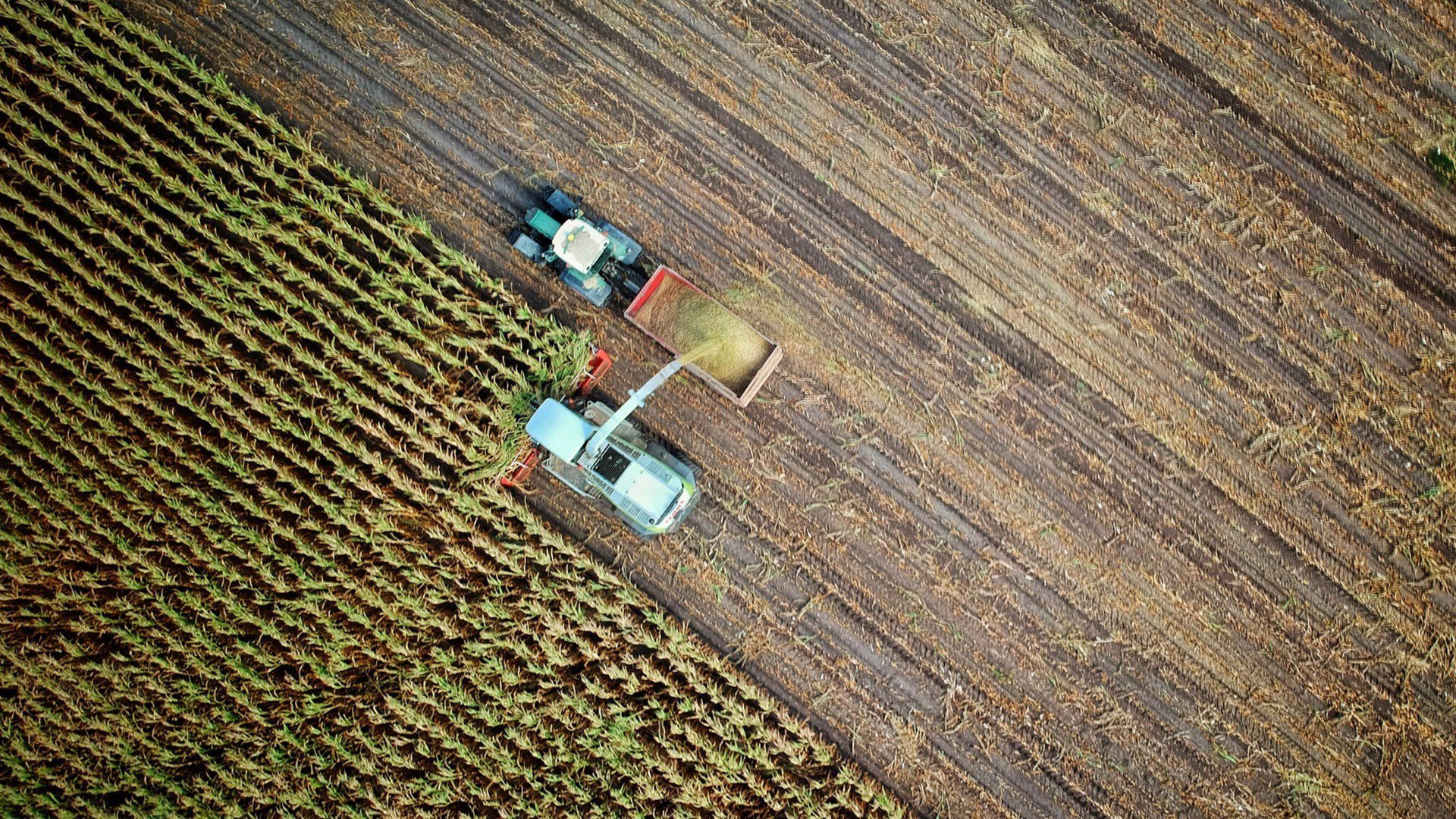 AgTech-Innovation-agricultural-production